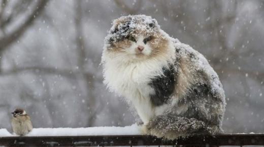 Україну скують сильні морози, у Карпатах – до мінус 20°