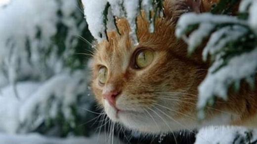Прогноз погоди на 28 лютого: зима попрощається холодом та мокрим снігом