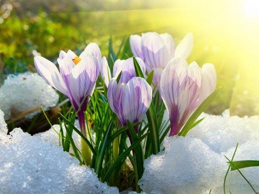 Весняне потепління на Закарпатті: головний синоптик області пояснив особливості пори цьогоріч