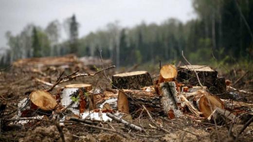 Молодого закарпатця судитимуть за незаконну вирубку лісу