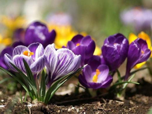 Прогноз погоди на 3 березня: українців тішитимуть сонце й тепло до +12 градусів