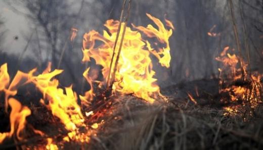 На Закарпатті зросла кількість загорань в екосистемах: рятувальники закликають не палити сухотрав'я
