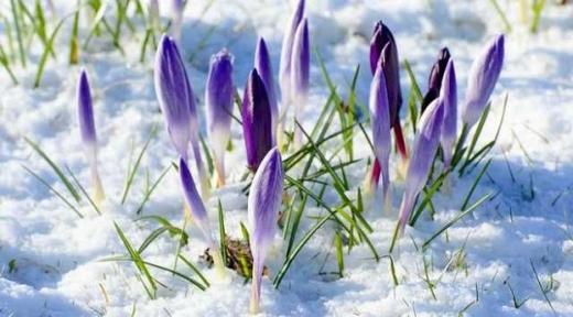 Прогноз погоди 8 березня: на Міжнародний день жінок тепла не буде