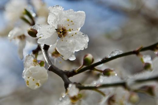 Прогноз погоди на 10 березня: в Україні буде холодно, проте без опадів