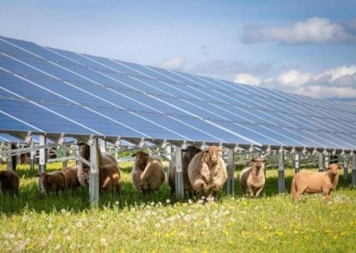 В Австрії встановили найбільшу сонячну електростанцію на овечій фермі