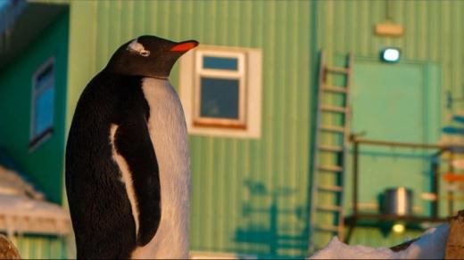 Українські полярники показали красу весняної Антарктиди: фото