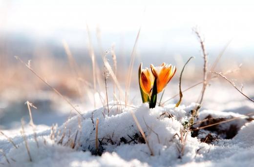 Зима не відпускає: Україну знову накриють снігопади – перелік регіонів
