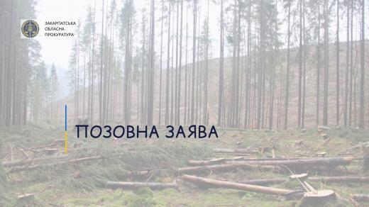 Прокуратура Закарпаття звернулася до суду через незаконні рубки лісу зі збитками майже на 7 млн грн