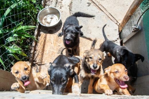 Ужгородці можуть допомогти безпритульним тваринам сортуючи сміття