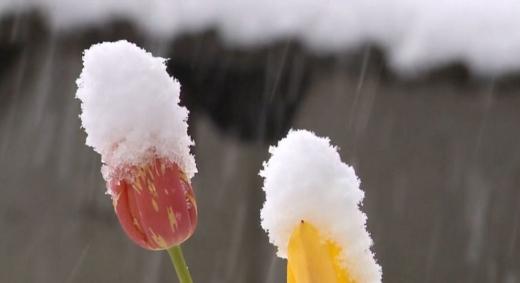 На Україну насувається снігова буря: температура знизиться до -7