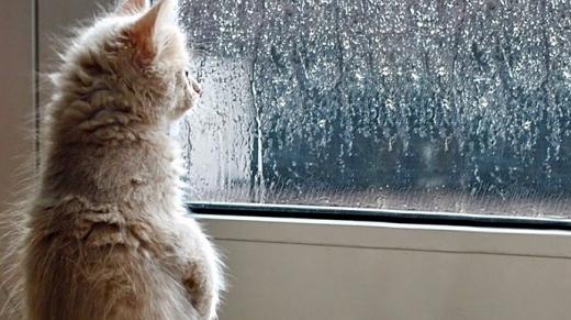У неділю буде прохолодно, місцями дощі