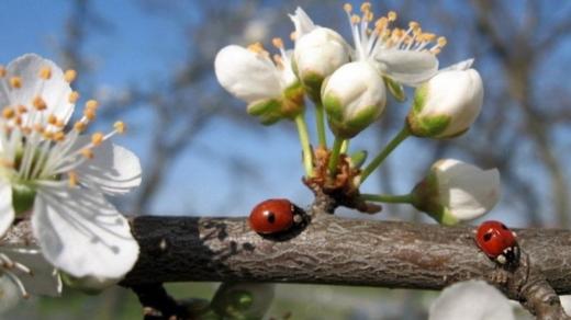 Прогноз погоди на квітень - якою буде температура протягом місяця