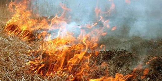 Під час спалювання сухостою серйозно травмувався мешканець Хустщини