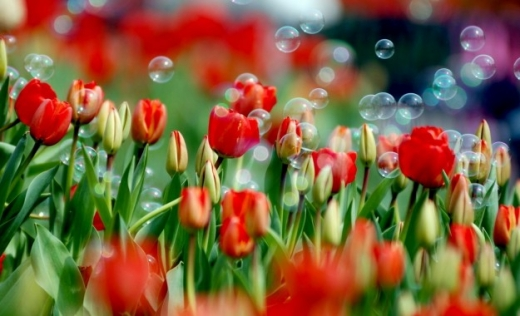 Гороскоп на 8 квітня для всіх знаків зодіаку