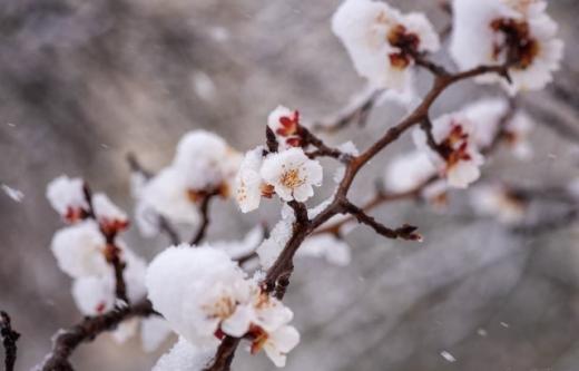 До 8° морозу: на Закарпатті очікують зниження температури повітря