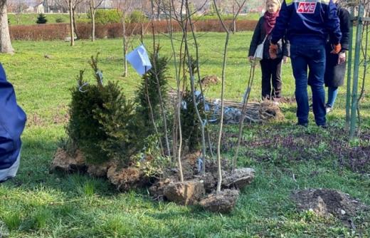 Волонтери в Мукачеві посадили понад 900 дерев (ФОТО)