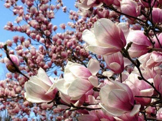 Гороскоп на 14 квітня для всіх знаків зодіаку: день, коли настрій може псуватися