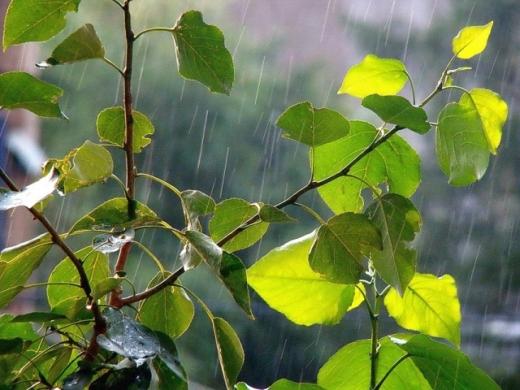 Сьогодні в Україні дощі заллють кілька областей, похолоднішає до +4°