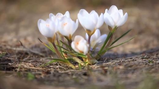 Гороскоп на 15 квітня для всіх знаків зодіаку