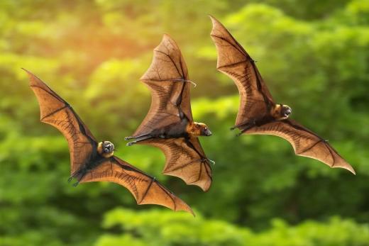 """На Закарпатті у єпископській резиденції відкрили виставку про """"повітряних акробатів ночі"""""""