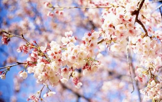 Гороскоп на 21 квітня для всіх знаків зодіаку: день досягнення важливої мети