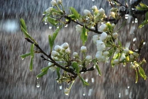 Погода на 26 квітня: у більшості регіонів буде прохолодною та дощовою