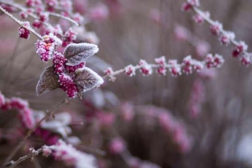 Значне зниження температури повітря очікують у Закарпатській області