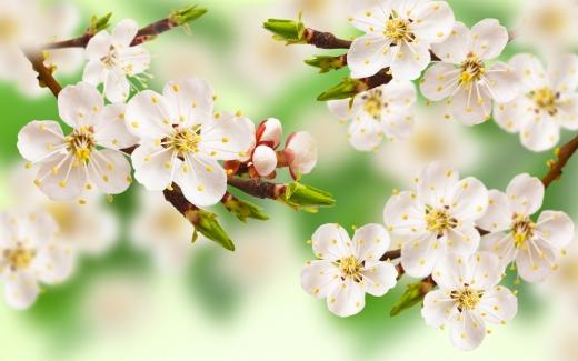 Гороскоп на 28 квітня для всіх знаків зодіаку: день, коли можна потрапити під сторонній вплив