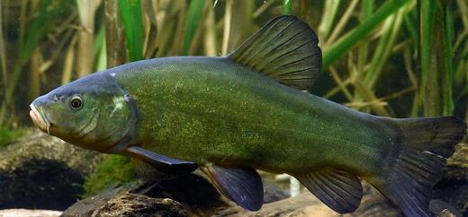 На Закарпатті відбулися Всеукраїнські змагання з ловлі хижої риби