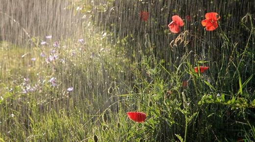 Більшу частину України знову накриють дощі