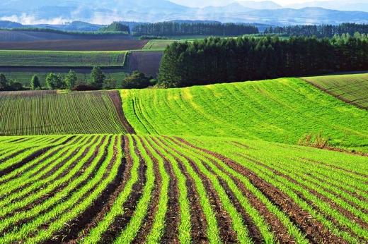Прокуратура Мукачева повернула державі земельну ділянку вартістю понад 700 тис. грн