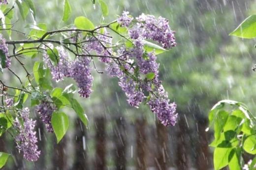 Синоптики прогнозують зміну погоди: коли в Україні припиняться дощі і розпочнеться справжнє літо