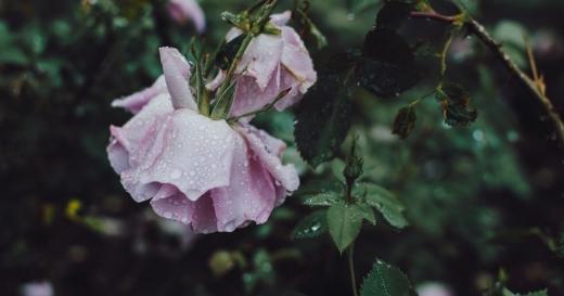 Спека і дощі з грозами: прогноз погоди в Україні на середу, 16 червня