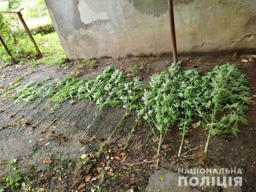 Молодого закарпатця викрили на вирощуванні рослин коноплі