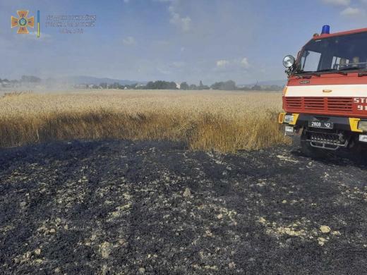 Ужгородські рятувальники ліквідували пожежу на пшеничному полі