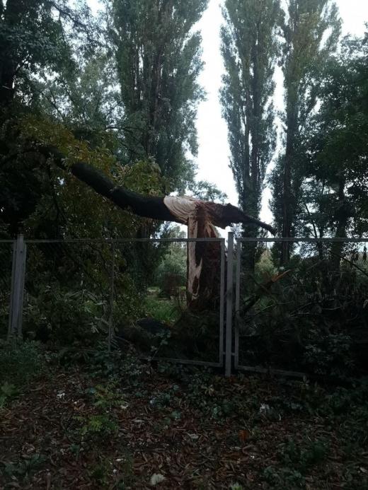 Підсумки негоди: в Ужгороді впало 7 дерев, одне на машину