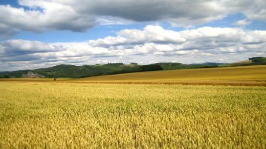 На Закарпатті попередили вибуття із державної власності земель вартістю 680 млн грн