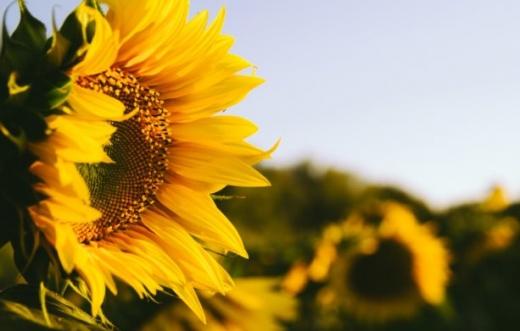 Прогноз погоди на 15 серпня: в Україні буде сухо та до +31 градуса