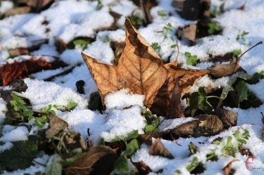 В Україні через 20 років може не бути зими: Кульбіда розповів про зміни клімату