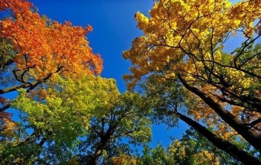 Вночі холодно, а вдень сонячно та до +23°: прогноз погоди в Україні на середу, 8 вересня