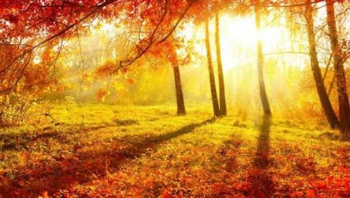 Осіннє сонце перед дощами: прогноз погоди на 11 жовтня