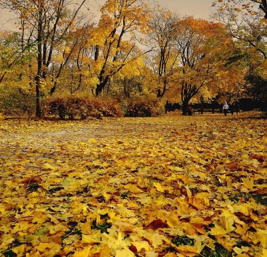 Синоптики обіцяють теплий та сонячний вікенд 9-10 жовтня